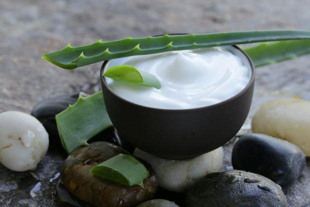 Aloes - lekarstwo i kosmetyk prosto z domowego parapetu