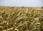 Ziemia rolna coraz droższa