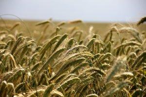 Ziemia rolna coraz dro�sza