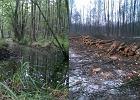 Efekt Szyszki. Rolnik tnie hektary wyjątkowego lasu na obszarze Natura 2000 [ZDJĘCIA]