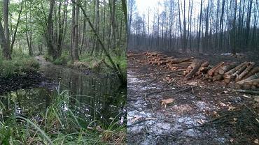 Rolnik spod Sławy (gmina Wschowa) wkrótce wytnie nawet 20 tys. drzew na terenie leżącym na chronionym obszarze Natura 2000. A wszystko na zlecenie Agencji Nieruchomości Rolnych. Przyrodnicy nie wierzą w to, co się dzieje. - Nie przygotowano żadnych ekspertyz czy opracowań, a żyje tutaj mnóstwo cennych gatunków. To dewastacja - mówią.