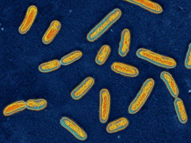 Odkryto pierwsze bakterie zombi