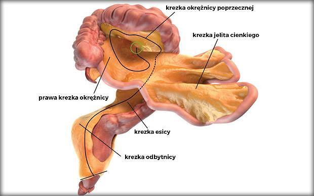 Mamy nowy narząd w ludzkim ciele