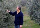 Naukowcy zniszczyli drzewa oliwne we W�oszech?