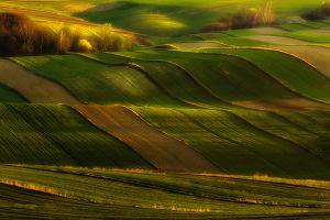 W Polsce może być jak w Toskanii? Fotograf pokazał piękno tkwiące w pozornie zwyczajnym krajobrazie