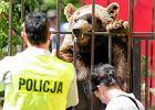 Fundacja Viva!: Zwierzęta w cyrkach są torturowane