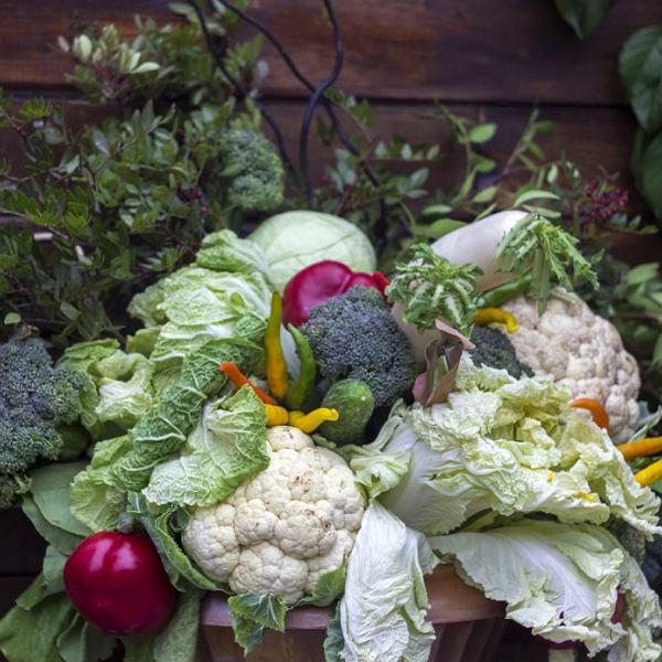 Dieta wegetariańska opiera się na warzywach, roślinach strączkowych, kaszach i nabiale