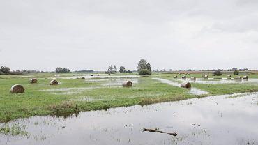 Stanisławów w gminie Baranów - rząd PiS planuje tu zbudować Centralny Port Lotniczy