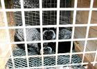 Koniec hodowli zwierząt na futra? Jarosław Kaczyński daje zielone światło dla zakazu dla ferm