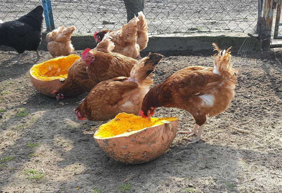 Ile kosztuje kura rosołowa