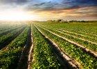 Kiedy koniec podwyżek cen na rynku gruntów rolnych