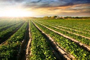 Kiedy koniec podwy�ek cen na rynku grunt�w rolnych