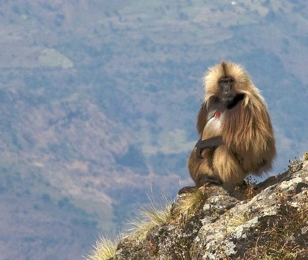Góry Simien, Etiopia / fot. CC/Flickr.com