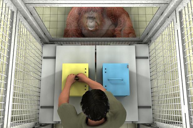 """""""Człowieku, mylisz się!"""". Małpy pomagają błądzącym ludziom"""