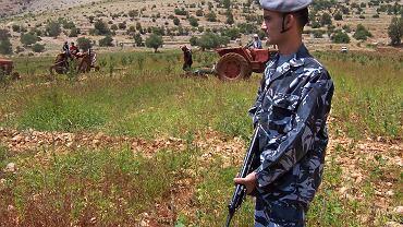 Libański oficer pilnuje pola maku w Dolinie Bekaa we wschodniej części kraju. Okolice te znane są z produkcji opium i marihuany.