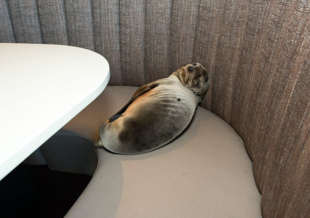 Mors w restauracji