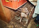 """Makabryczna """"fabryka zwierząt"""" w Dobrczu. """"Koty umierały, leżąc w odchodach"""""""