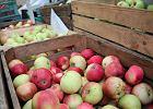 Kremlowska tuba: Czy Polacy sami zjedz� swoje robaczywe jab�ka za miliard?