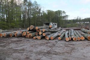Mieszkania Plus na terenie lasów? Leśnicy obawiają się skutków programu PiS