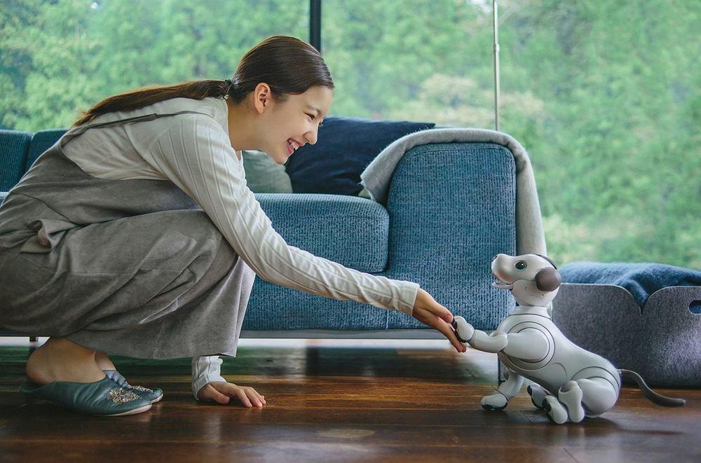 Sony właśnie wróciło do projektu zawieszonego dekadę temu: pies-robot Aibo nowej generacji będzie mógł uczyć się sztuczek - dzięki AI