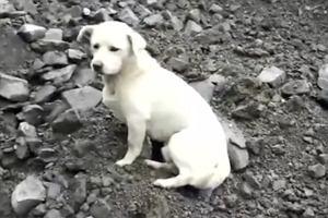 Tragiczna lawina w Syczuanie. Chińczycy poruszeni smutnym psem czekającym na gruzowisku