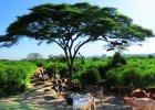 Intryguj�ca Etiopia - kraj karabin�w i zaginionej arki
