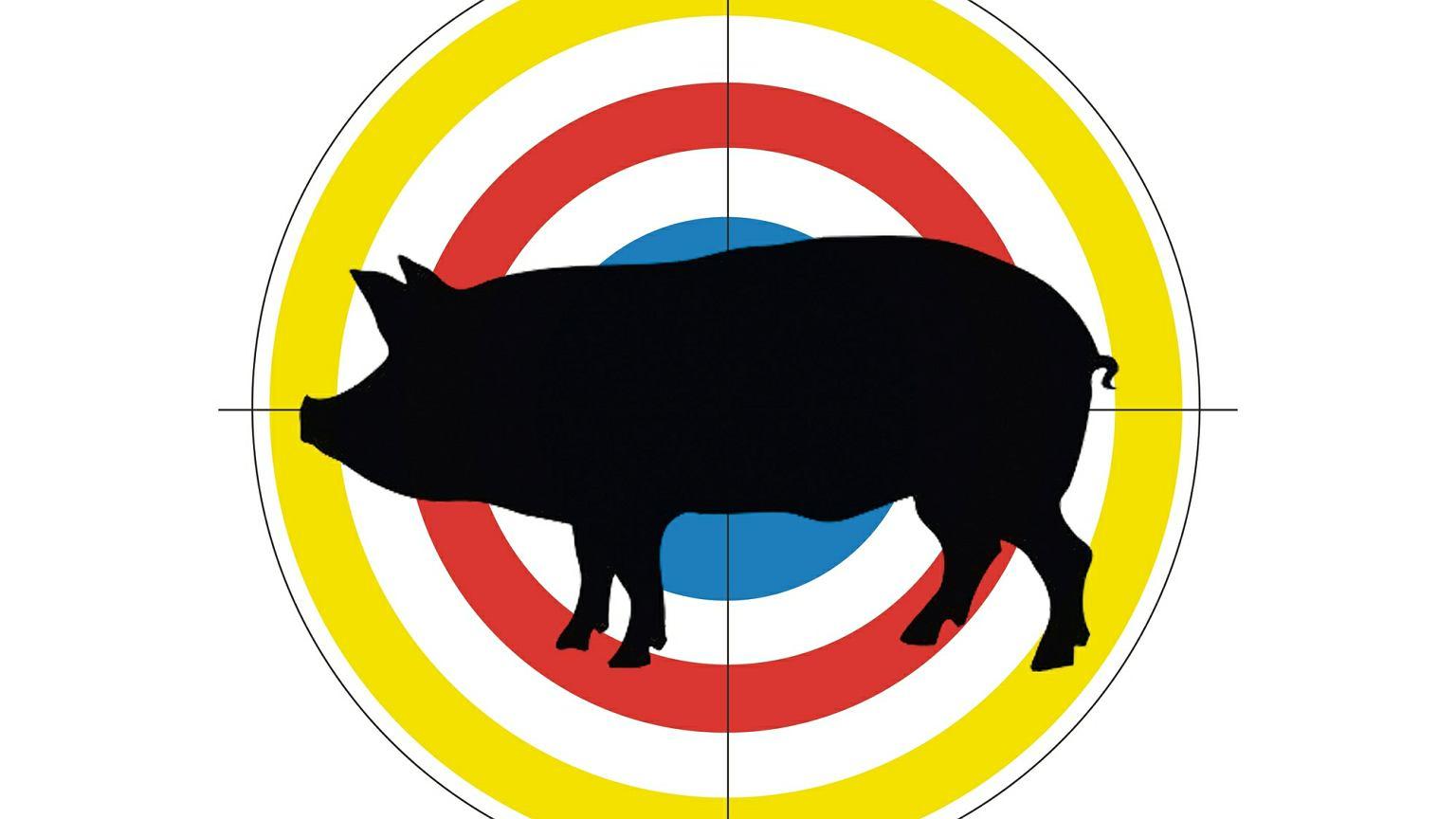 eb50745cb8456 Afrykański pomór świń na podlaskiej wsi. Wygaszają ogniska ASF, a przy  okazji wygaszają relacje