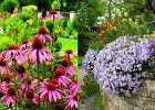 Jak dbać o kwiaty w ogrodzie?