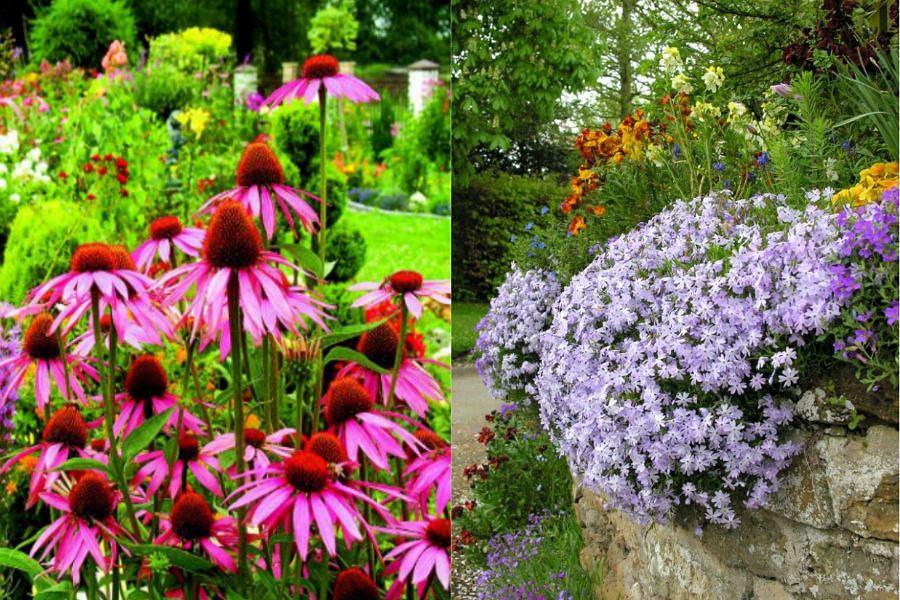 Jak Dbac O Kwiaty W Ogrodzie