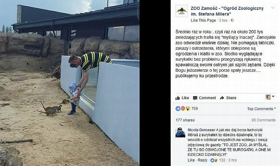 Nieodpowiedzialny mężczyzna w ogrodzie zoologicznym