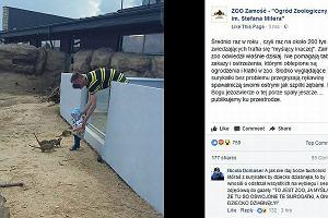 Zoo w Zamościu pokazało to zdjęcie. Ojciec wkłada małe dziecko do wybiegu z dzikimi zwierzętami