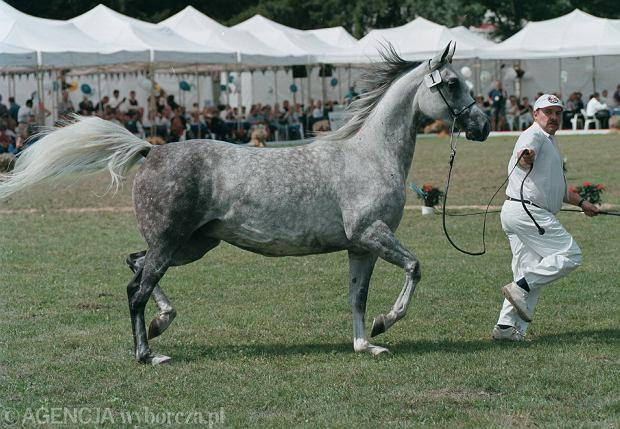 Aukcja koni arabskich zostaje w Janowie. W organizacji pomog� Targi Pozna�skie?