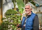 Zrobi� biznes na bonsai. Sprzedaje drzewko za kilka tys. euro