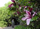 Uniwersytet Warszawski zaprasza do ogrodu botanicznego na spacer