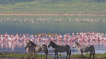 Tanzania stała się popularnym kierunkiem wśród podróżników marzących o safari. Safari w najsłynniejszych parkach narodowych Tanzanii to niesamowite przeżycie. Na zdjęciu: Park Narodowy Serengeti, Afryka - Tanzania