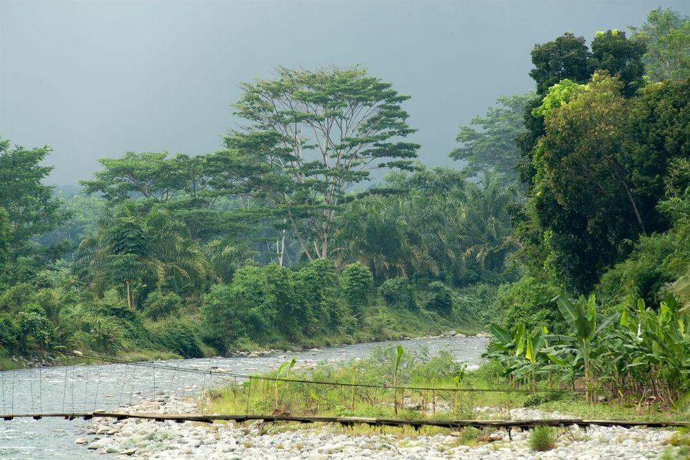 Park Narodowy Ujung Kulon - Indonezja / fot. Shutterstock