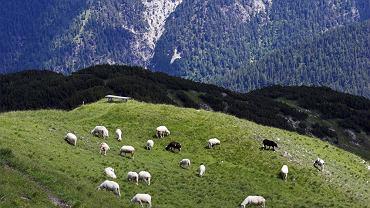 Seefelderspitze