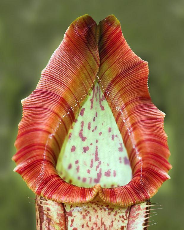 Dzika przyroda: seksowne rośliny