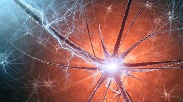 Pląsawica Huntingtona jest chorobą genetyczną ośrodkowego układu nerwowego