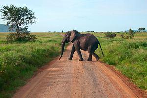 Kenia safari - Masai Mara [EKSKLUZYWNE WYPRAWY]