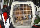 Warszawa: Nie będzie uchwały dla zwierząt