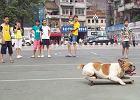 Pies uzależniony od... jazdy na desce?