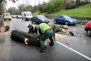 Drzewem w samochody, czyli wycinka na Powi�lu