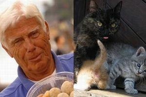 Skandal w telewizji. Dali przepis na potrawę z kota