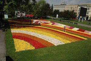 G��wki tulipan�w zdobi� miasto