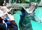 Wandale w zoo: karmi� zwierz�ta ciastkami z gwo�dziami, kradn� szczotki z WC