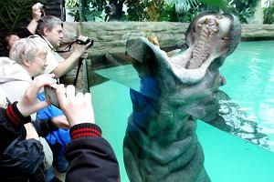 Wandale w zoo: karmią zwierzęta ciastkami z gwoździami, kradną szczotki z WC