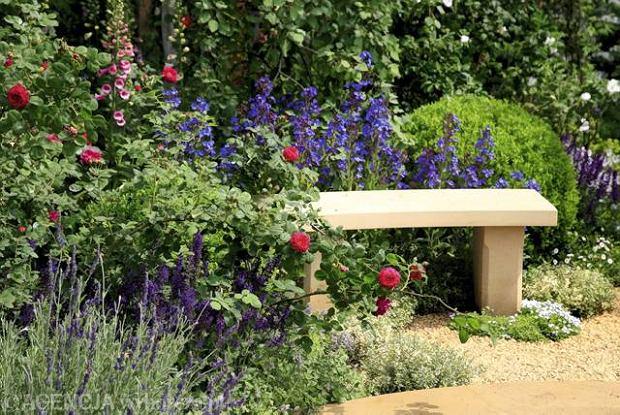 Modne rabaty. Miło wypoczywać wśród wonnych róż i ziół (lawendy, macierzanki), błękitnych farbowników, różowych naparstnic. W tle kula z bukszpanu.