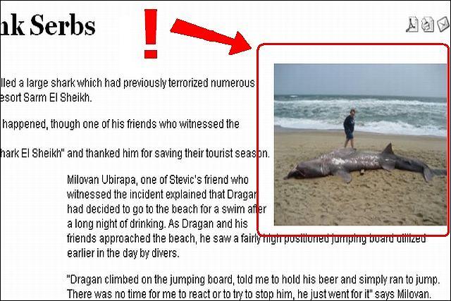Zabójca rekina-ludojada.
