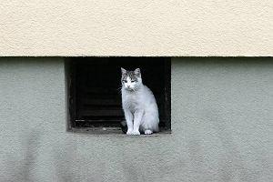 Opiekunowie dzikich kotów grożą prezydentowi: przyniesiemy kocięta do magistratu